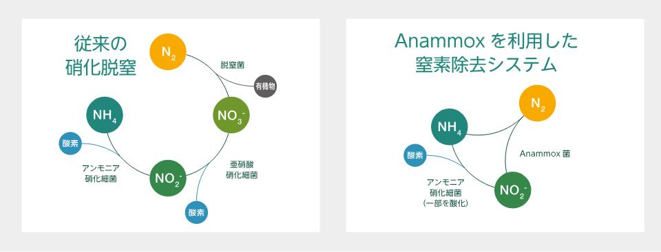 Anammoxを利用した窒素除去システム