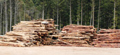 伐採木の受入