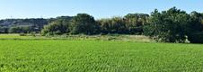 農業生産事業